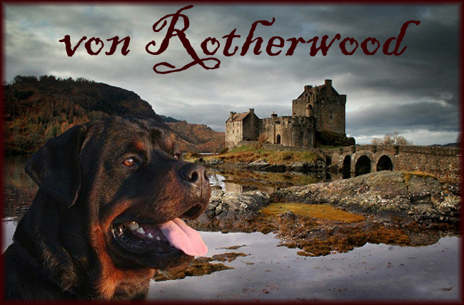 ROTHERWOOD KENNEL Rottweiler Breeder in Ontario Canada - show and